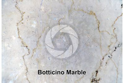 Botticino Marble. Lombardy. Italy. Polished section
