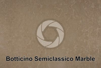 Botticino Semiclassico Marble. Lombardy. Italy. Polished section. 1X