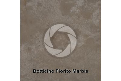 Botticino Fiorito Marble. Lombardy. Italy. Polished section. 1X