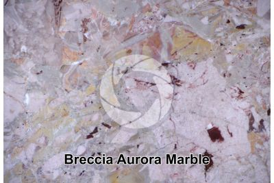 Breccia Aurora Marble. Lombardy. Italy. Polished section