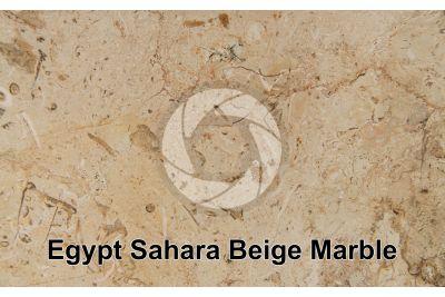 Egypt Sahara Beige Marble. Egypt. Polished section