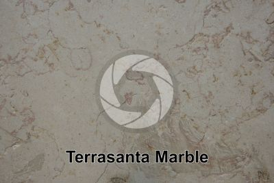 Terrasanta Marble. Iran. Polished section