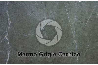Marmo Grigio Carnico. Friuli Venezia Giulia. Italia. Sezione lucida