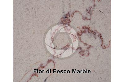 Fior di Pesco Marble. Seravezza. Tuscany. Italy. Polished section. 1X