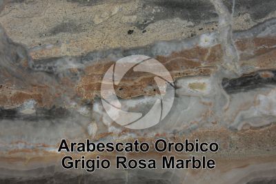 Arabescato Orobico Grigio Rosa Marble. Bergamo. Lombardy. Italy. Polished section