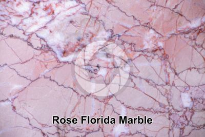 Rose Florida Marble. Valencia. Spain