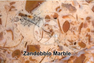 Zandobbio Marble. Lombardy. Italy. Polished section. 3X