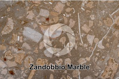Zandobbio Marble. Lombardy. Italy. Thin section. 10X