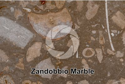 Zandobbio Marble. Lombardy. Italy. Thin section. 18X