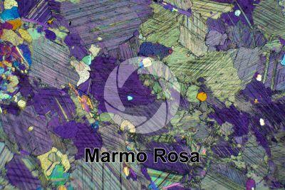 Marmo Rosa. Austria. Sezione sottile in luce polarizzata a Nicol incrociati con filtro lambda. 32X