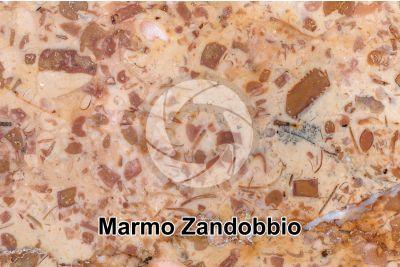 Marmo Zandobbio. Lombardia. Italia. Sezione lucida. 2X