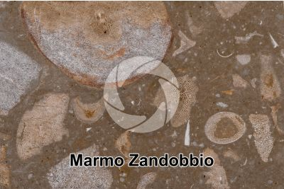 Marmo Zandobbio. Lombardia. Italia. Sezione sottile. 25X