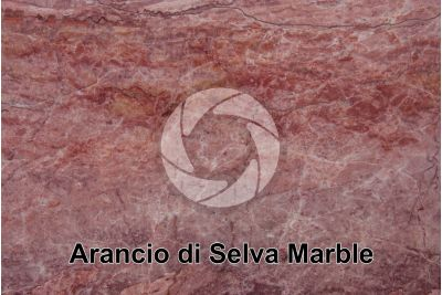 Arancio di Selva Marble. Verona. Veneto. Italy. Polished section