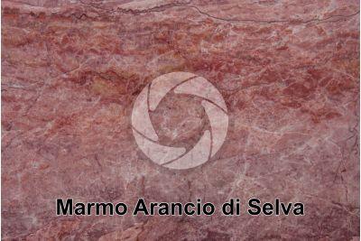 Marmo Arancio di Selva. Verona. Veneto. Italia. Sezione lucida