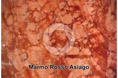 Marmo Rosso Asiago. Veneto. Italia