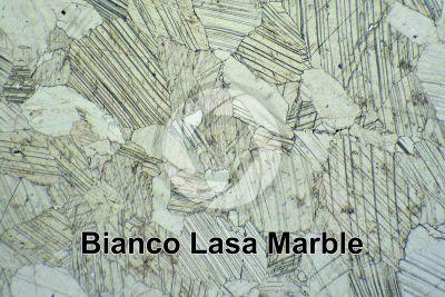 Bianco Lasa Marble. Trentino Alto Adige. Italy. Thin section in plane polarized light. 32X