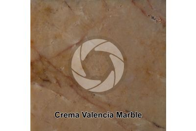 Crema Valencia Marble. Valencia. Spain. Polished section. 1X