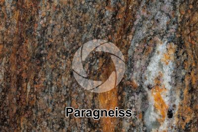 Paragneiss. Sole Valley. Trentino Alto Adige. Italy. Polished section. 1X