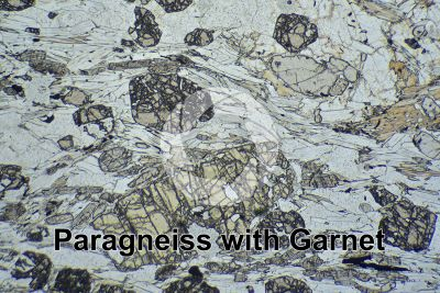 Paragneiss with Garnet. Sole Valley. Trentino Alto Adige. Italy. Thin section in plane polarized light. 32X