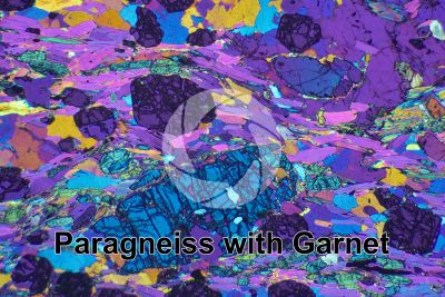 Paragneiss with Garnet. Sole Valley. Italy. Thin section in cross polarized light with lambda filter. 32X