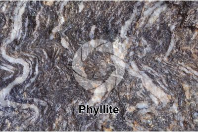 Phyllite. Valdiola. Marche. Italy. Polished section. 2X