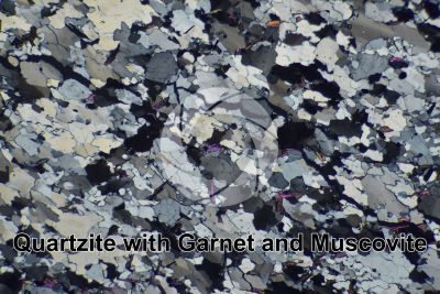 Quartzite with Garnet and Muscovite. Thin section in cross polarized light. 32X
