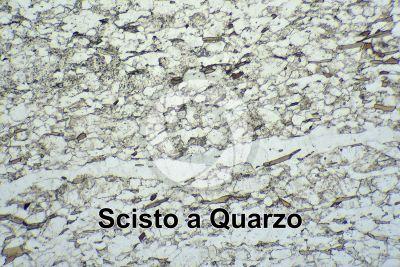 Scisto a Quarzo. Sezione sottile in luce polarizzata. 32X
