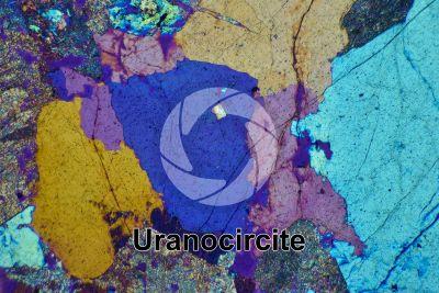 Uranocircite. Sezione sottile in luce polarizzata a Nicol incrociati con filtro lambda. 32X
