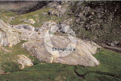 Sheepback. Val Seriana. Lombardy. Italy