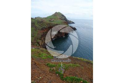Cliff. Ponta de Sao Lourenco. Madeira. Portugal