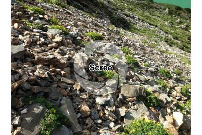 Scree. Val Seriana. Lombardy. Italy