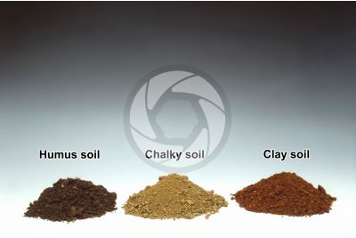 Humus chalky clay soil