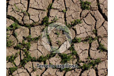 Terreno argilloso