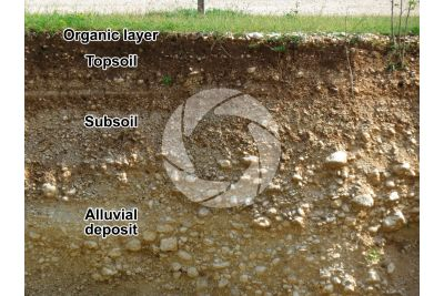 Alluvial soil. Cross section