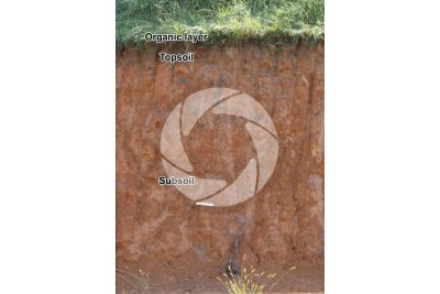 Clay soil. Cross section
