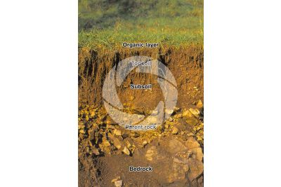 Soil cross section