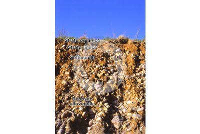 Terreno alluvionale in sezione