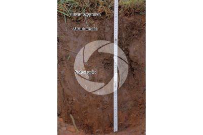 Terreno argilloso in sezione