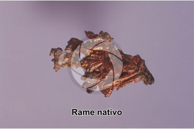 Rame nativo