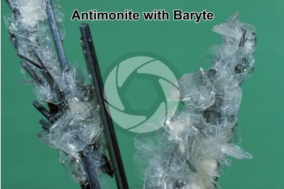 Antimonite with Baryte