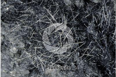 Plumosite