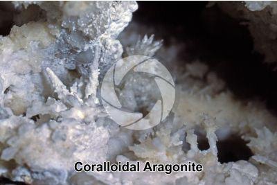 Coralloidal Aragonite
