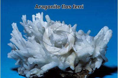 Aragonite flos ferri. Schilpario. Lombardia. Italia