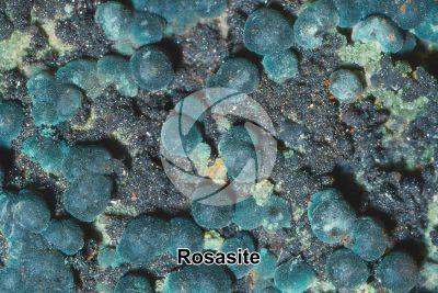 Rosasite
