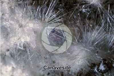 Canavesite