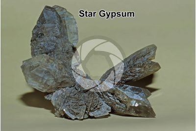 Star Gypsum