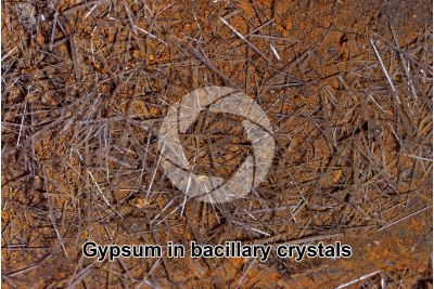 Gypsum in bacillary crystals