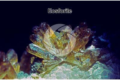 Eosforite