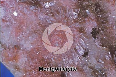 Montgomeryite