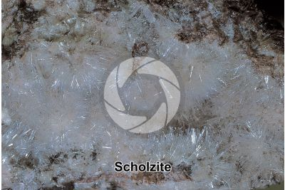 Scholzite